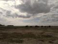 African Elephant Herd.png