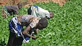 African Kids working in the family farm.jpg