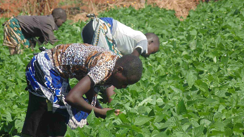 African Kids working in the family farm