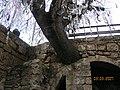 Agia Salomonis Wunschbaum - panoramio - Arnold Schott (1).jpg