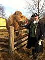 Aladdin the Camel Mt Vernon 25 Dec 2011.jpg