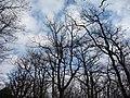 Alberi nel cielo - panoramio.jpg
