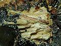 Allanpringite-122708.jpg