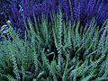 Allerheiligen - Pflanzen - panoramio.jpg