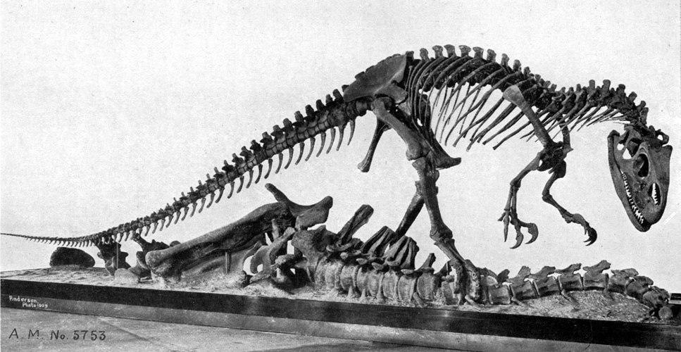 AllosaurusAMNH5753