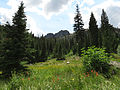 Alpine Meadow (15162183746).jpg