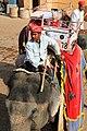 Amber, India (23611397555).jpg