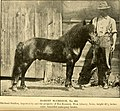American horses and horse breeding - a complete history of the horse from the remotest period in his history to date. The horseman's encyclopedia and standard authority on horses, embracing breeds, (14781801541).jpg