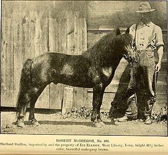 American Shetland Pony - A stallion imported to the United States by Eli Elliot