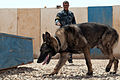 Anbar Police stand up K-9 unit DVIDS272340.jpg