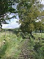 Ancient Routeway, near Tregaron, Ceredigion - geograph.org.uk - 565513.jpg