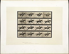 Animal locomotion. Plate 626 (Boston Public Library).jpg