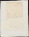 Antilope sumatrensis - 1700-1880 - Print - Iconographia Zoologica - Special Collections University of Amsterdam - UBA01 IZ21400175.tif