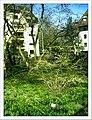 April Freiburg Botanischer Garten - Master Botany Photography 2013 - panoramio (15).jpg