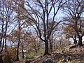 Arboles del cerro santa cruz en jovel.JPG