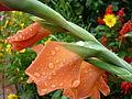 Around the garden (2721453989).jpg