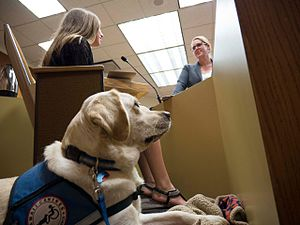 Assistance dog - Astro the courthouse facility dog assists a child witness in court.