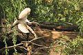 Austin Roberts Bird Sanctuary-028.jpg