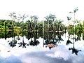 Autazes Lago do Tucunaré Comunidade Santa Luzia Am Brasil (2).JPG