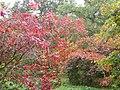 Autumn colours at Westonbirt arboretum - geograph.org.uk - 1014603.jpg