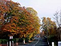 Autumn colours on Walton Road, Stockton Heath - geograph.org.uk - 603491.jpg