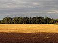 Avenue of Trees and Farmland - geograph.org.uk - 59465.jpg