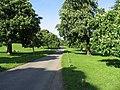 Avenue to Rolleston Hall - geograph.org.uk - 181077.jpg