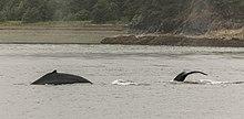 Orca Tours Juneau