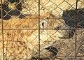 BDF Wildlife Training Area (4904062240).jpg