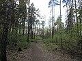 Balashikha, Moscow Oblast, Russia - panoramio (323).jpg