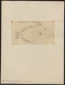 Balistes undulatus - 1700-1880 - Print - Iconographia Zoologica - Special Collections University of Amsterdam - UBA01 IZ15400105.tif