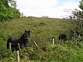 Ballyboy Townland - geograph.org.uk - 1494820.jpg