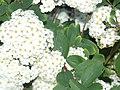 Bedazzling Flowers.jpg