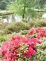 Bedgebury Spring - geograph.org.uk - 796931.jpg