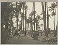 Beeld van Ramses II liggend op de grond tussen palmen in Memphis, RP-F-F01141-S.jpg
