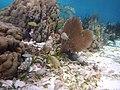Belize snuba (17843957711).jpg