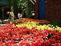 Bellagio Conservatory - 2012 Spring Celebration (7156348316).jpg