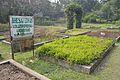 Bhesaj Udyan - Agri-Horticultural Society of India - Alipore - Kolkata 2013-01-05 2261.JPG