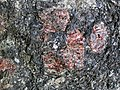 Big garnet amphibolite (Precambrian; Warrensburg, Adirondack Mountains, New York State, USA) 51.jpg