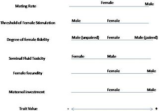 Male sexuality vs female sexuality in urdu