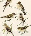 Birds of America; (1923) (19761906614).jpg