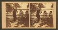 Black Bear, from Robert N. Dennis collection of stereoscopic views.png