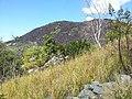 Black Mountain (Kalkajaka) National Park, Queensland 07.jpg