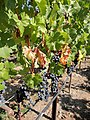 Black Stallion Winery, Napa Valley, California, USA (6681902267).jpg