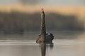 Black Swan - Pitt Town Lagoon.jpg