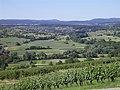 Blick durch die Ellmendinger Weinberge aufs obere Pfinztal - panoramio.jpg