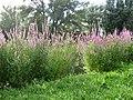 Bloemen langs een gracht in Houtwijk.JPG