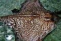 Blue Reef Aquarium 9 March 2005 Cornwall w (278547189).jpg