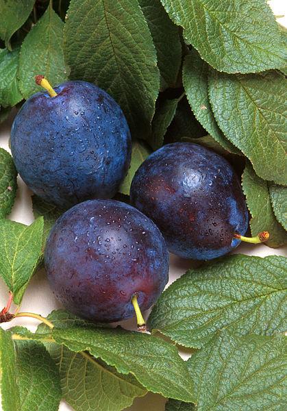 prunes et feuilles