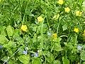 """Blumen im LSG """"Frauenbrünnl"""".jpg"""